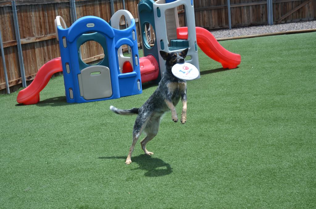 Dog Boarding Activities Indoor Outdoor Play Boarding