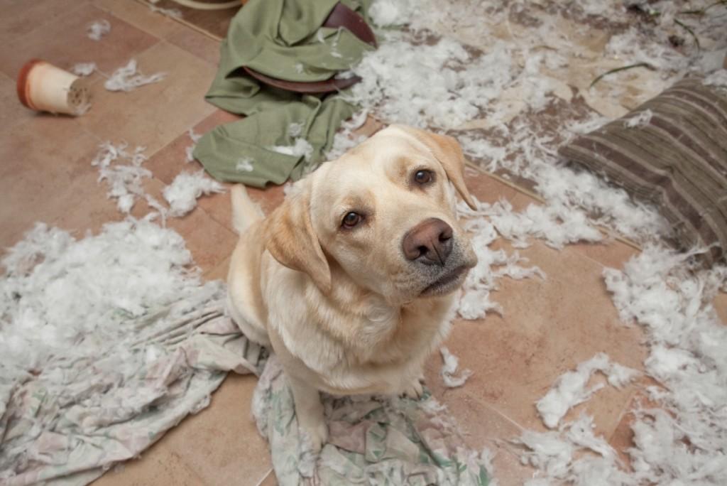dog-trouble