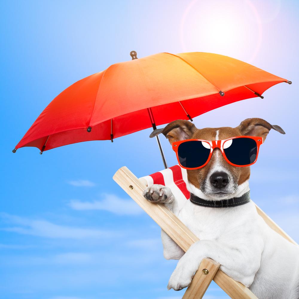 dog sun fun