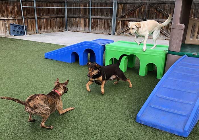 Dog Daycare Aurora I-225 Socialization Training   Boarding & Beyond